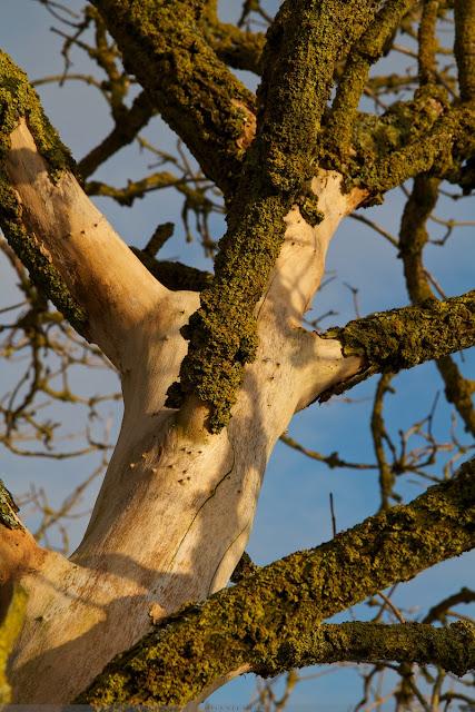 Boom detail - Tree detail
