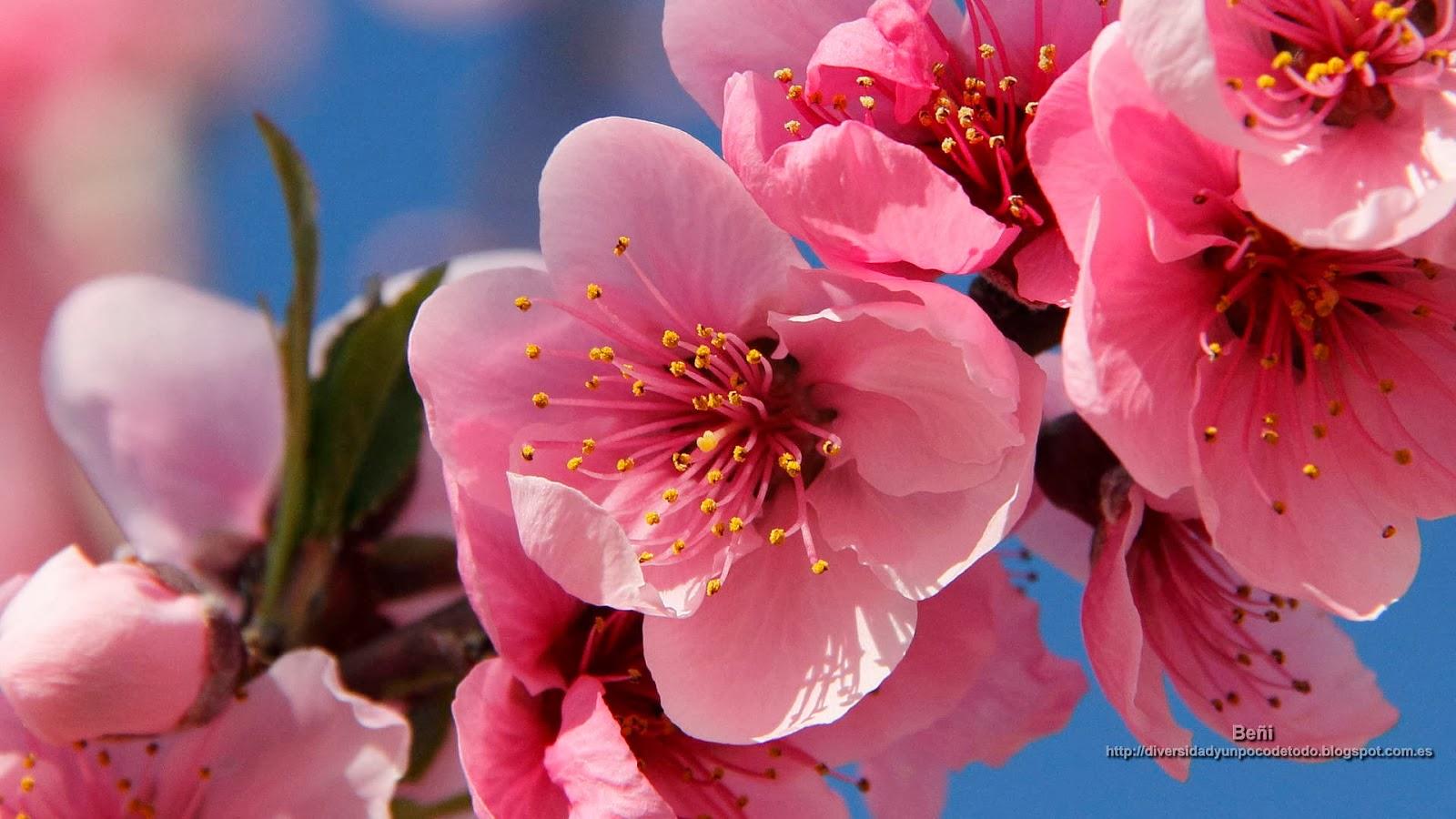 Palabra y Imagen - Página 39 09-Flor+Melocotonero-5532-169
