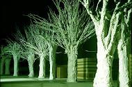Arquitectura Arbórea