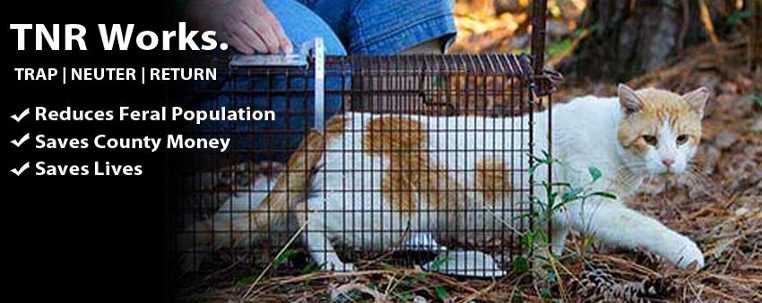 Spay Neuter Kingston Initiative