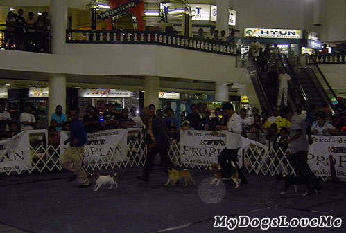 [Image: iloilo-kennel-club-dog-show-breed-exhibi...ndlers.jpg]