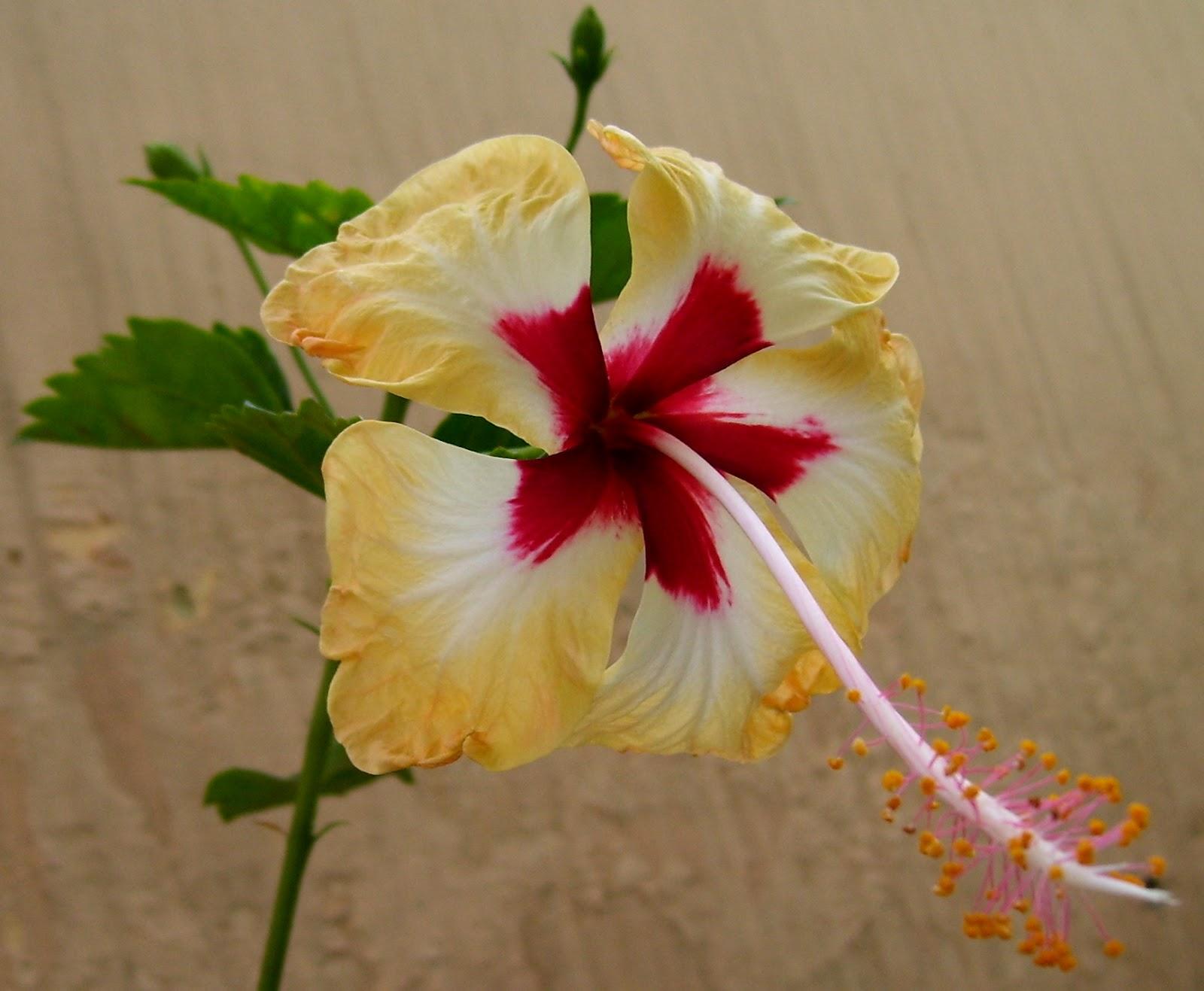 Bloom: Few flowering plants in my Garden