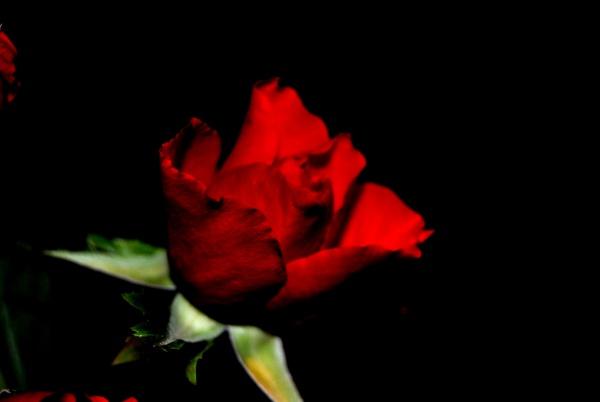 blumen in flowerspictures die sch nsten blumen der welt. Black Bedroom Furniture Sets. Home Design Ideas