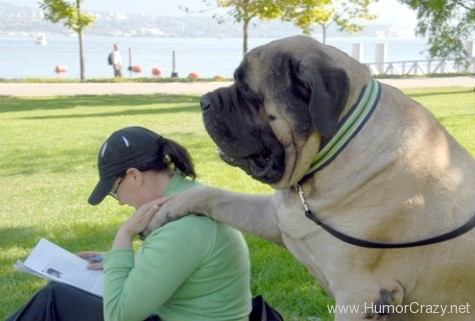 Hercules: The Biggest Dog ever world in accordance with Guinness World