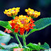 Top 9 loài cây xanh khắc tinh của muỗi nên trồng trong nhà!
