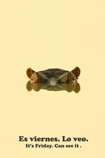 hippo lurking