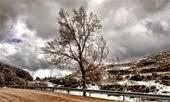 Un árbol para Sara