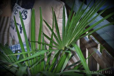 Palme plantasjen