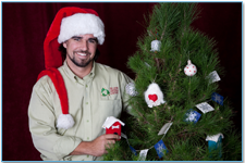 Live Christmas Tree Rental
