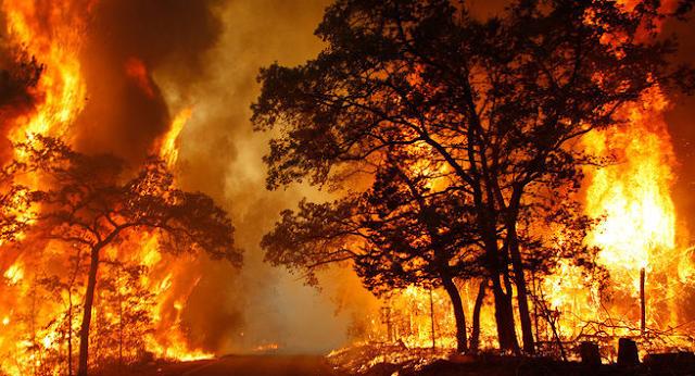 Salah satunya kebakaran hutan adalah bentuk kebakaran yang tidak dapat