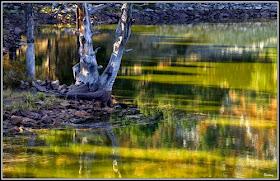 * Laguna de los CISNES *