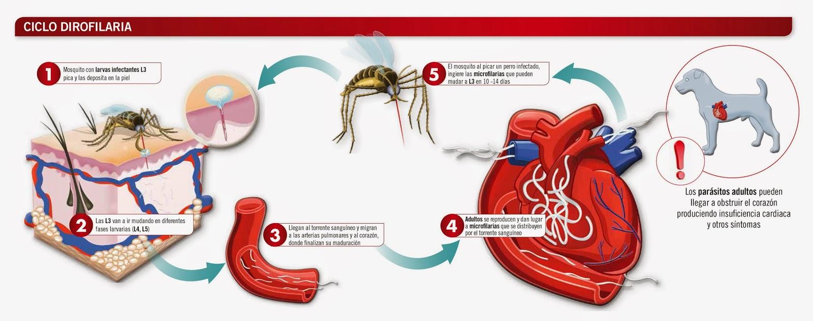 Circuito Sanguineo : Veterinarios ronda: mayo 2014