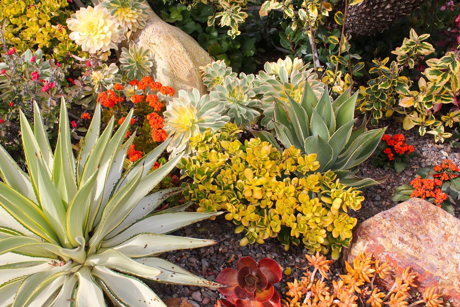Magnificent, Mature Succulent Gardens   Michael Buckner   San Diego