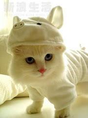 kucing jepun