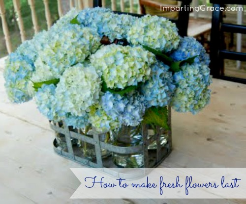imparting grace how to make your cut flowers last longer. Black Bedroom Furniture Sets. Home Design Ideas