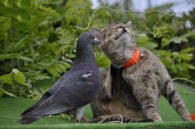 gato e pombo