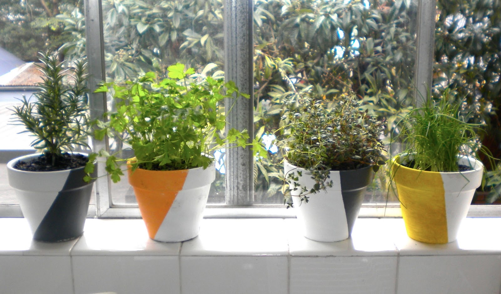 emerald and may diy how to grow herbs indoors. Black Bedroom Furniture Sets. Home Design Ideas
