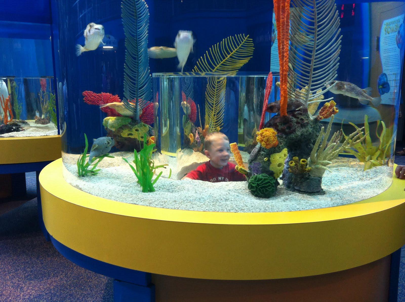 Shirt Pockets: Ripley's Aquarium, Pigeon Forge