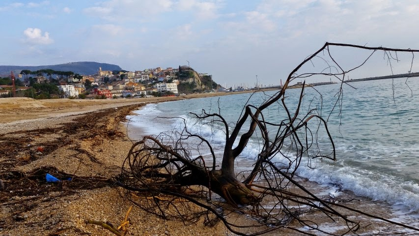 legname in spiaggia a Numana