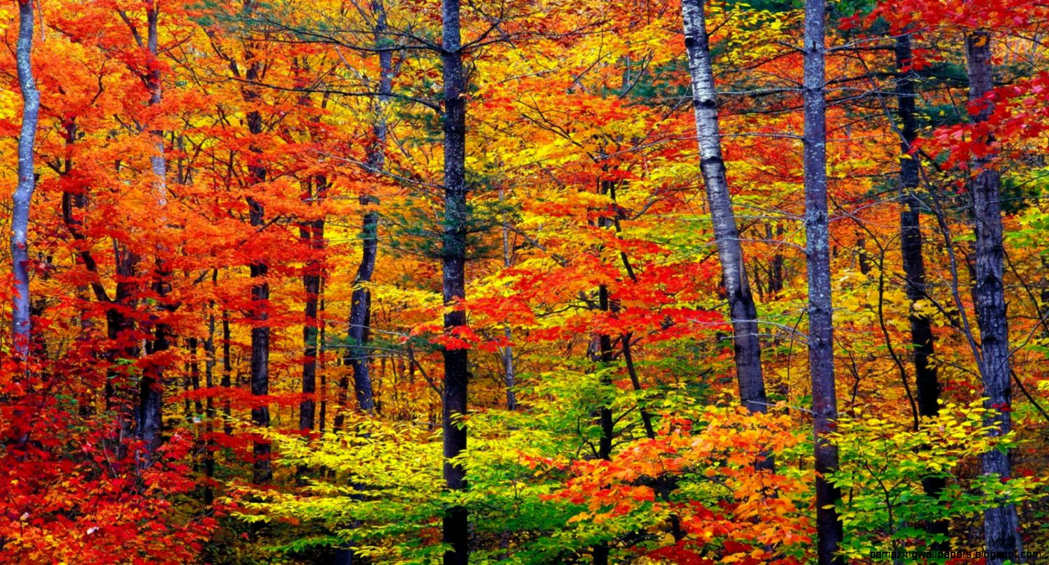 Vibrant Autumn Colors Wallpaper Autumn Nature Wallpapers in jpg