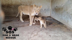 Help Animals in Taiz Zoo