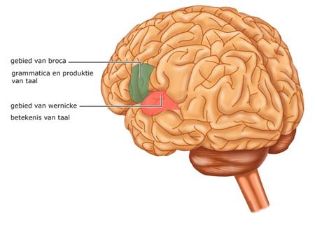 bewegen goed voor hersenen