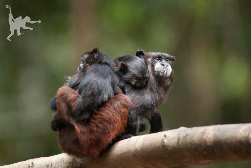 Madre y crías de Bebeleche