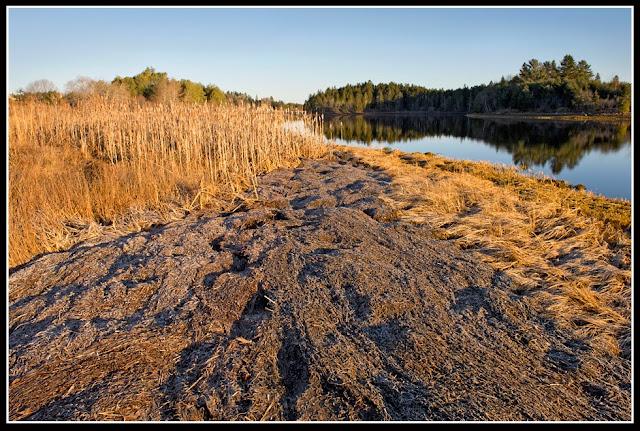 Nova Scotia; Grass; Seaweed
