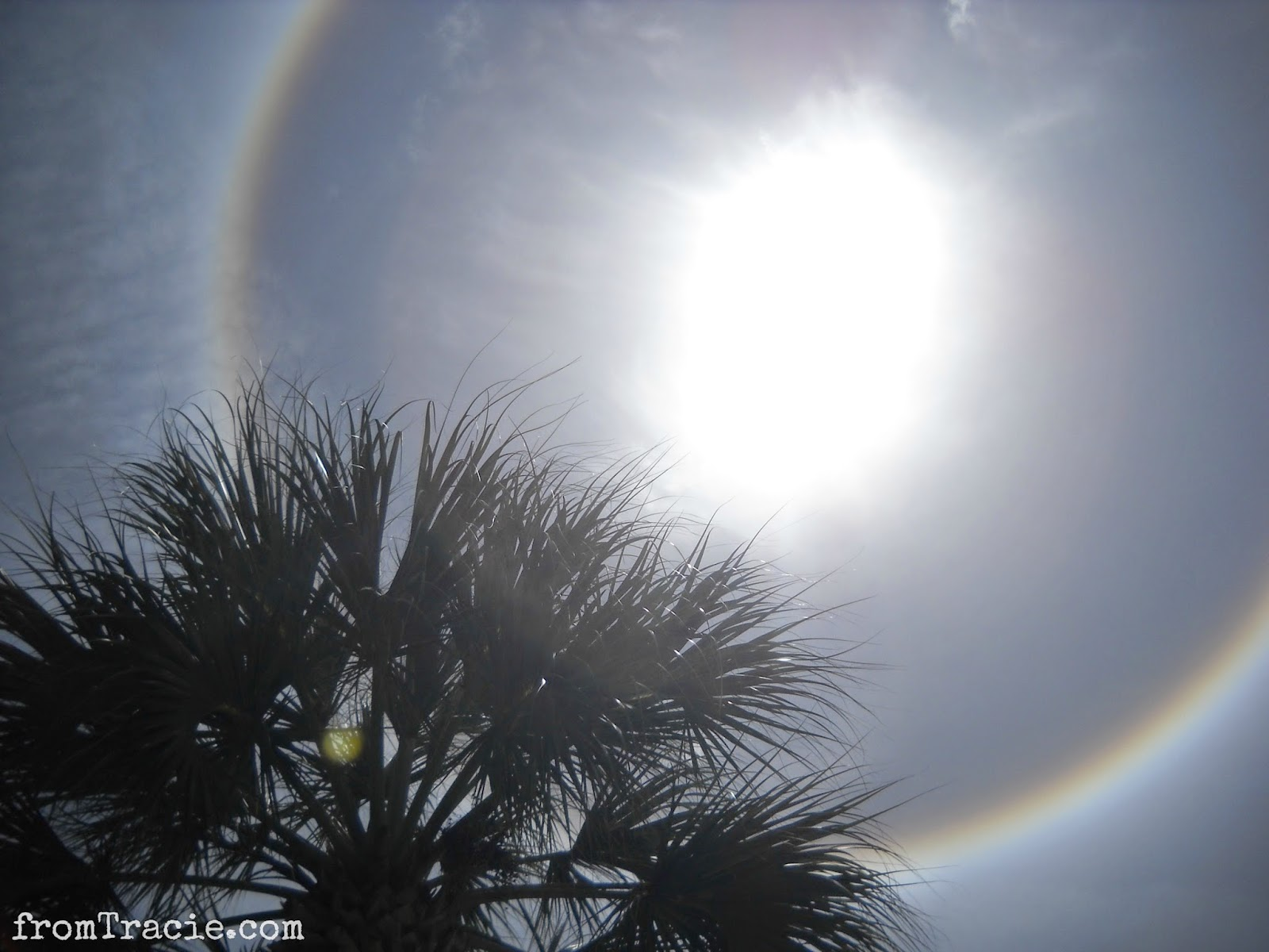 Sun Halo and Palm Tree