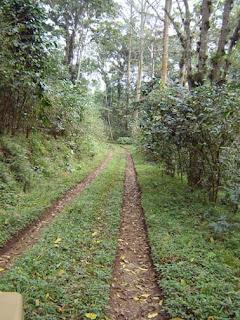 Huatusco