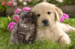Ser amigo é ser tolerante e amável!