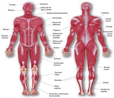 Regiones del cuerpo | Anatomia