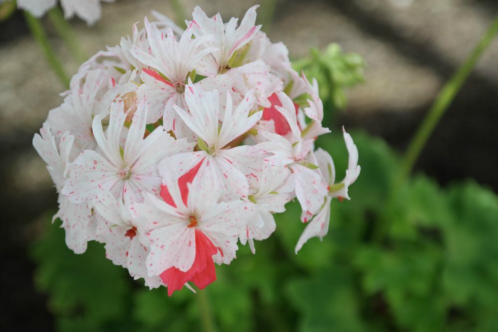 David Welch Winter Gardens - Duthie Park, Aberdeen. 80s neon flowers.