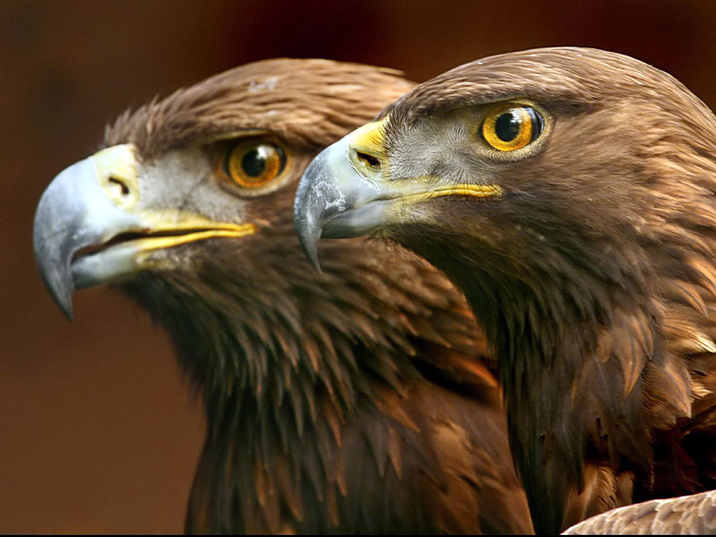 beauty of wildlife photos stock of animals and birds photography