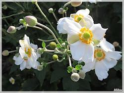 Au jardin les dernières fleurs