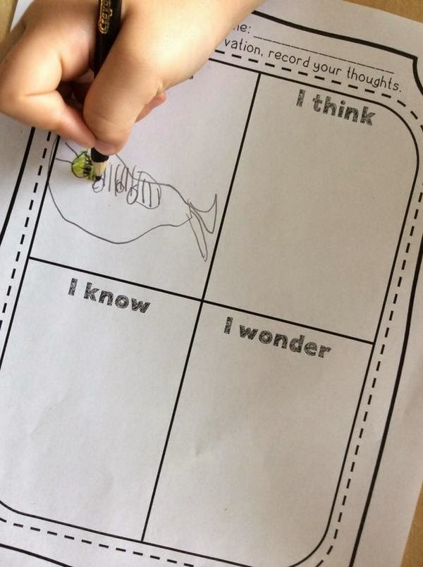 I See, I Know, I Think, I Wonder - Looking Closely and Inferencing
