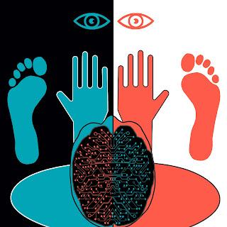 cerebro y lateralidad
