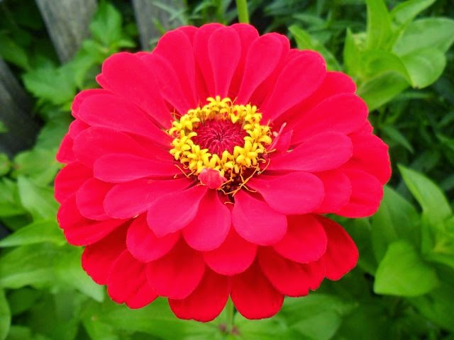 Мои скромные цветы...