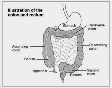 Pounds How The Are Colon Feces Many Of In