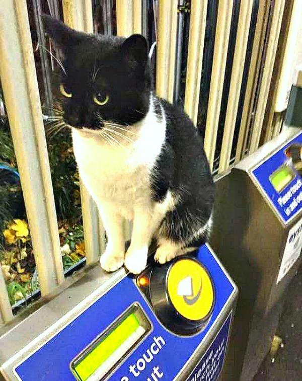 train station cat