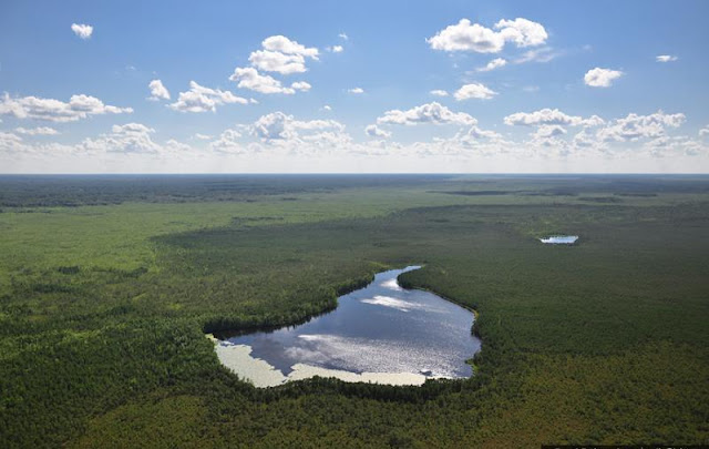 Vasyugan Swamp