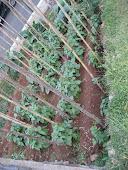 A Agricultura é uma solução