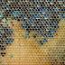 Έλλειψη μελισσών «απειλεί τις ευρωπαϊκές καλλιέργειες»