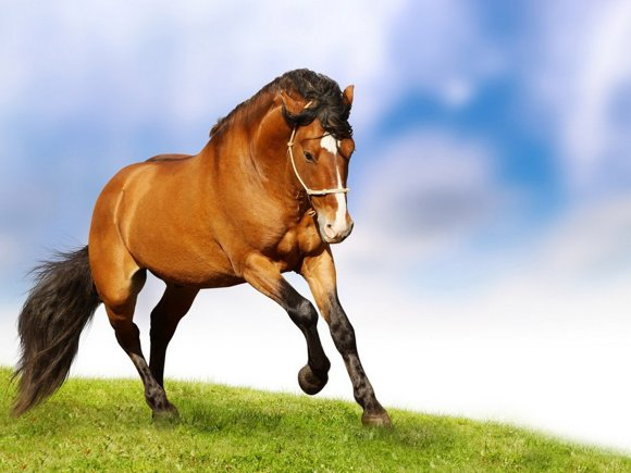 Horses Photo Art Wallpaper 05