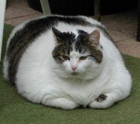 Koleksi Gambar Kucing Lengkap