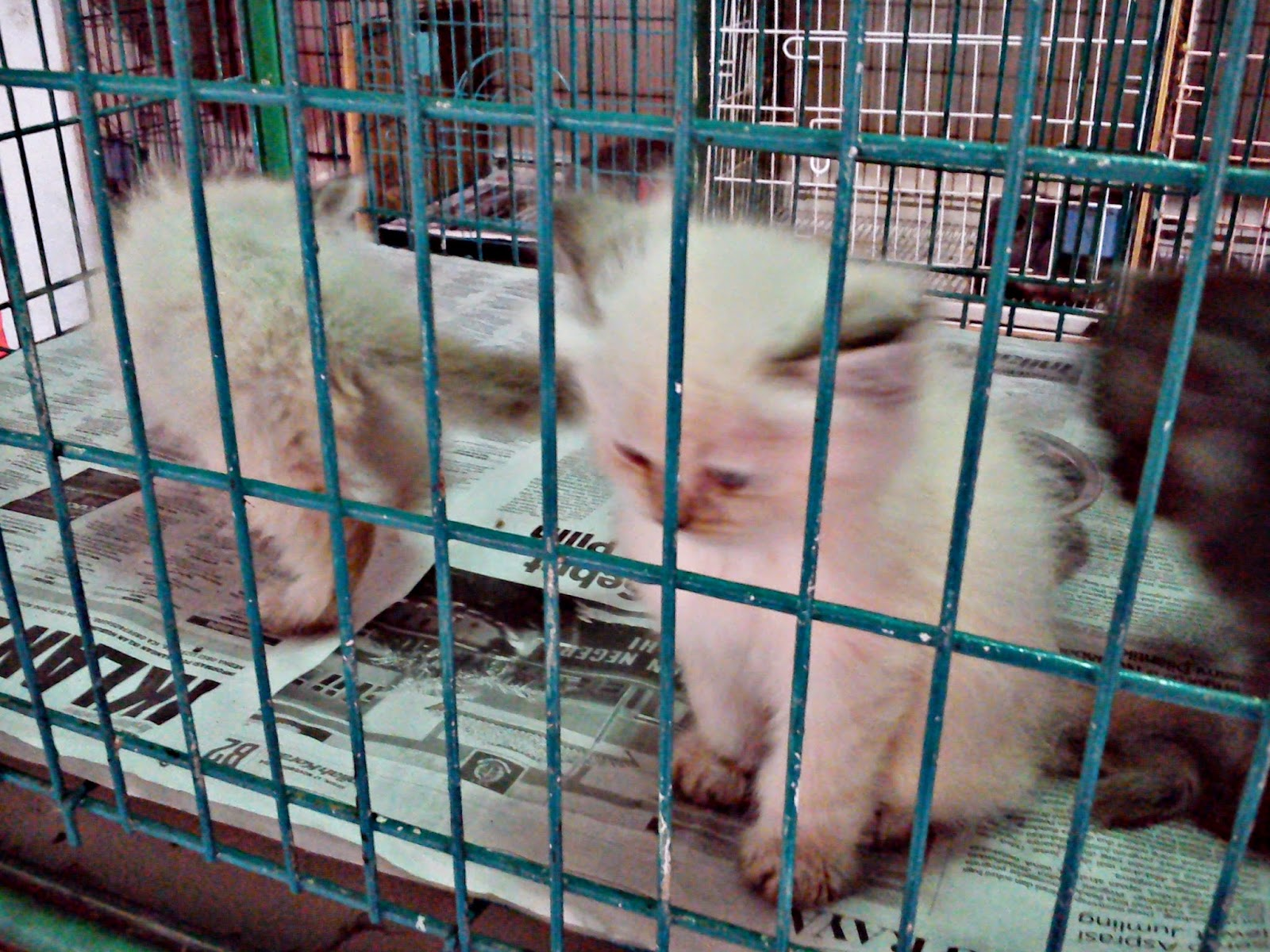 Kucing di Pasar Burung Sukahaji, Bandung.