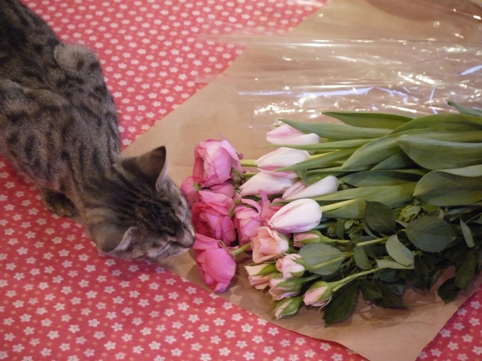 chat fleurs
