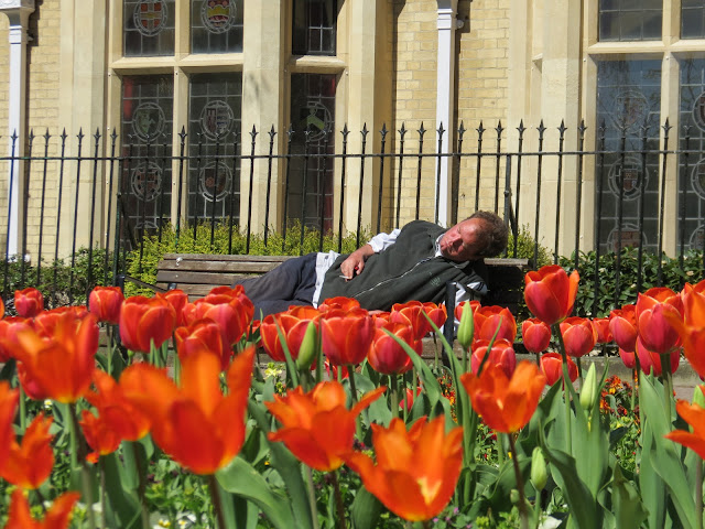 Cambridge man sleeping flowers