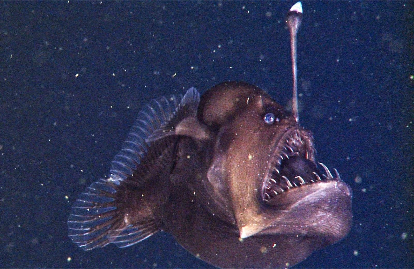 Ufo mania 2014 11 23 for Deep ocean fish