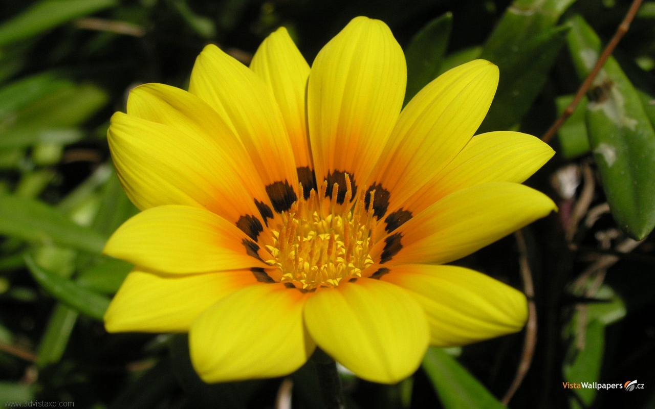 Free Download Flower Wallpapers Beautiful Flower Wallpapers Flower